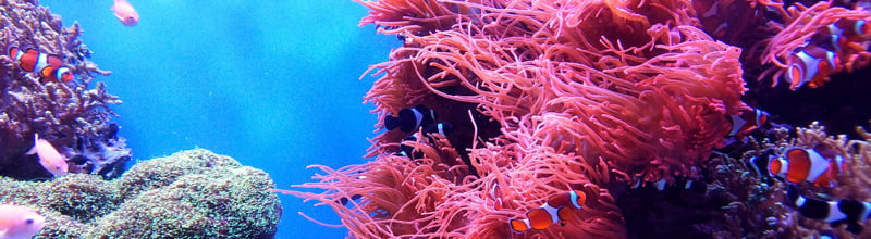 Scuba Diving Holidays for Beginners and Masters